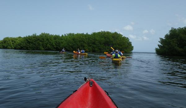 Guadeloupe Mangrove Safari