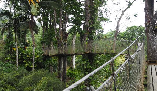 Martinique Jardin Balata
