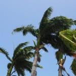 Martinique Palms