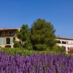 Provence Pont Royal Setting 3