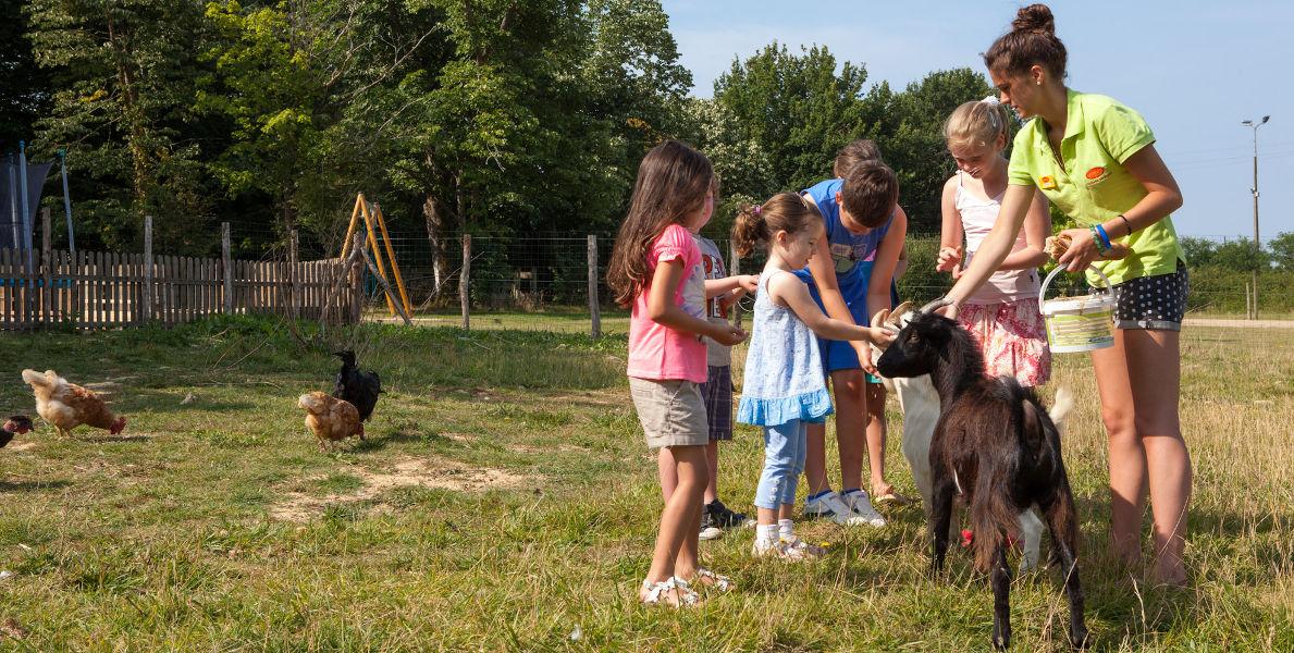 St Julien Foret Animal Farm