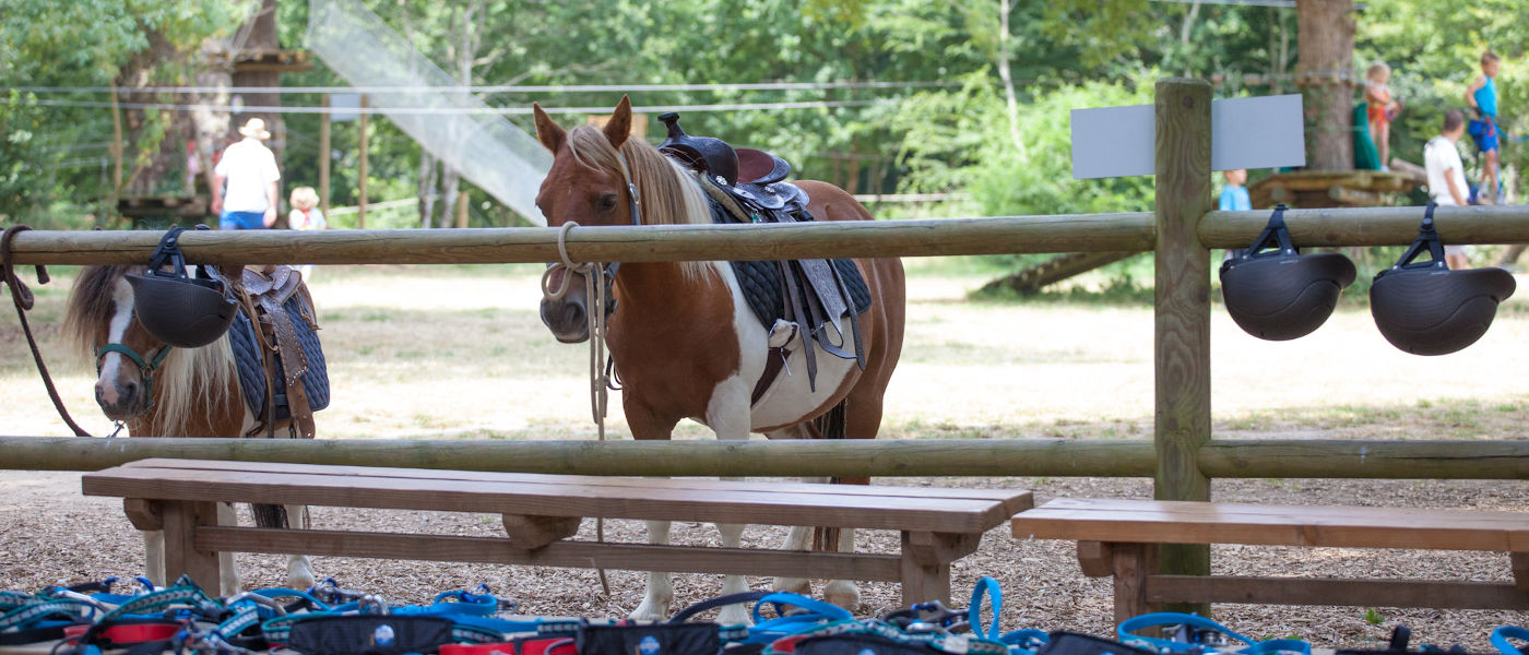 St Julien Foret Horses