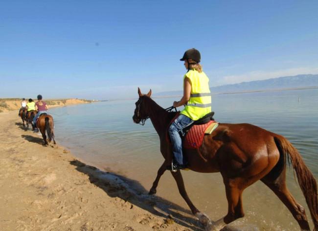 Firefly Holidays Zaton Resort Horses 600h