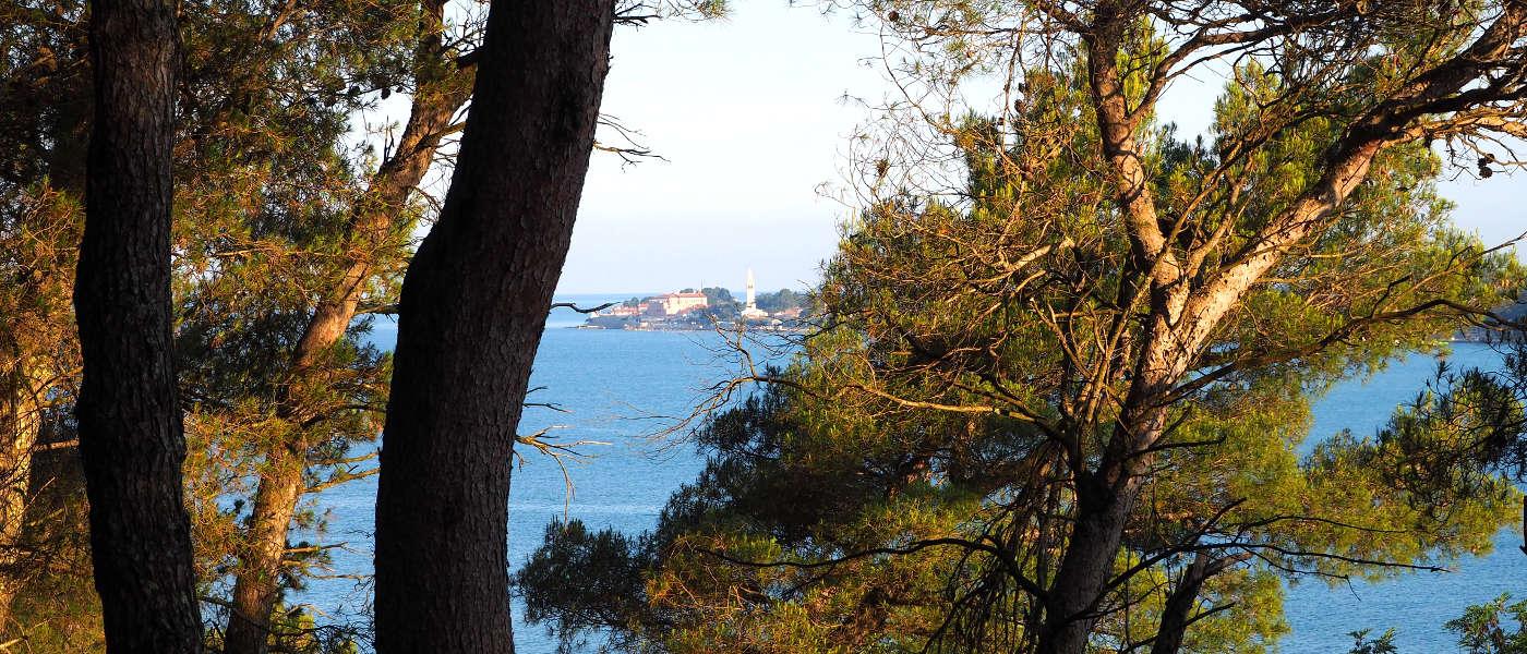 Firefly Holidays Croatia Novigrad Through Trees