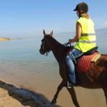 Firefly Holidays Zaton Holiday Resort Horses