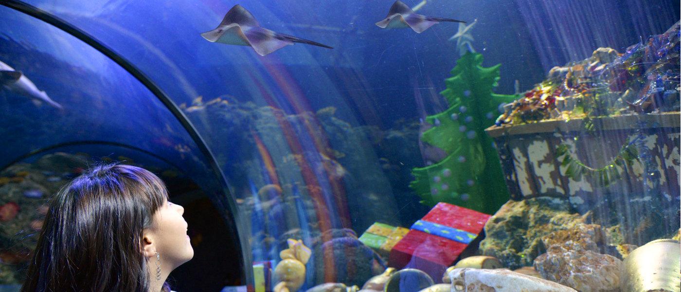 Firefly Holidays Cisano Garda Sealife
