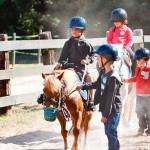 Sequoia Parc Horses 1b