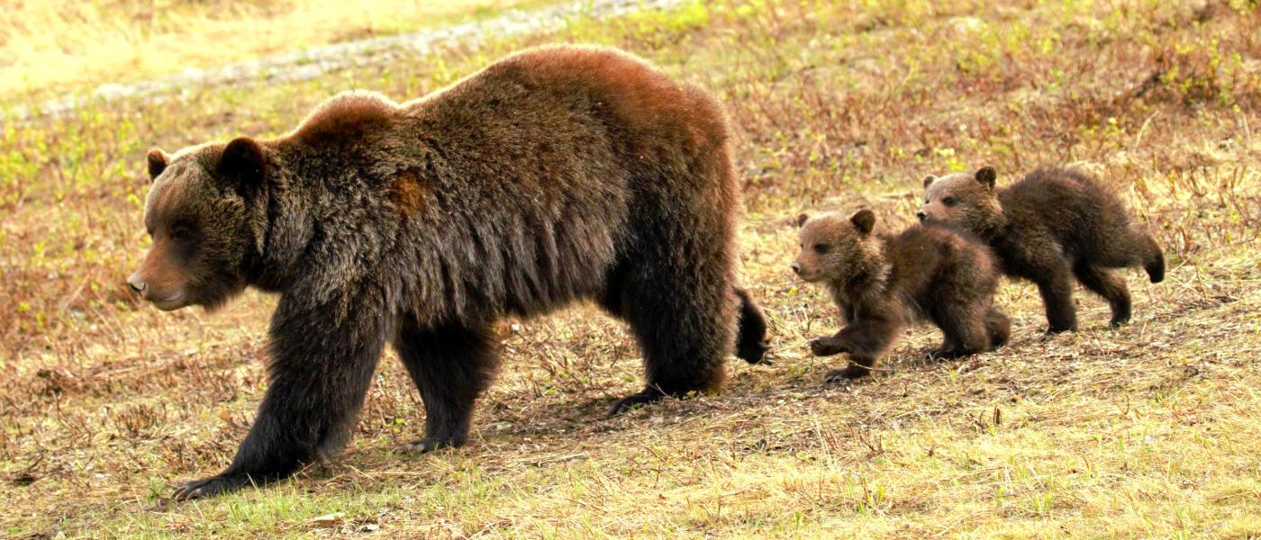 Firefly Holidays Jasper Bears