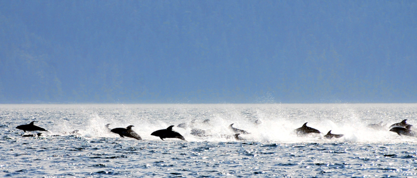 Firefly West Coast Dolphins