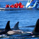 Tofino Whale 3