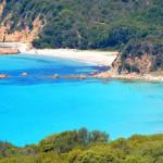 Firefly Corsica Beach 2